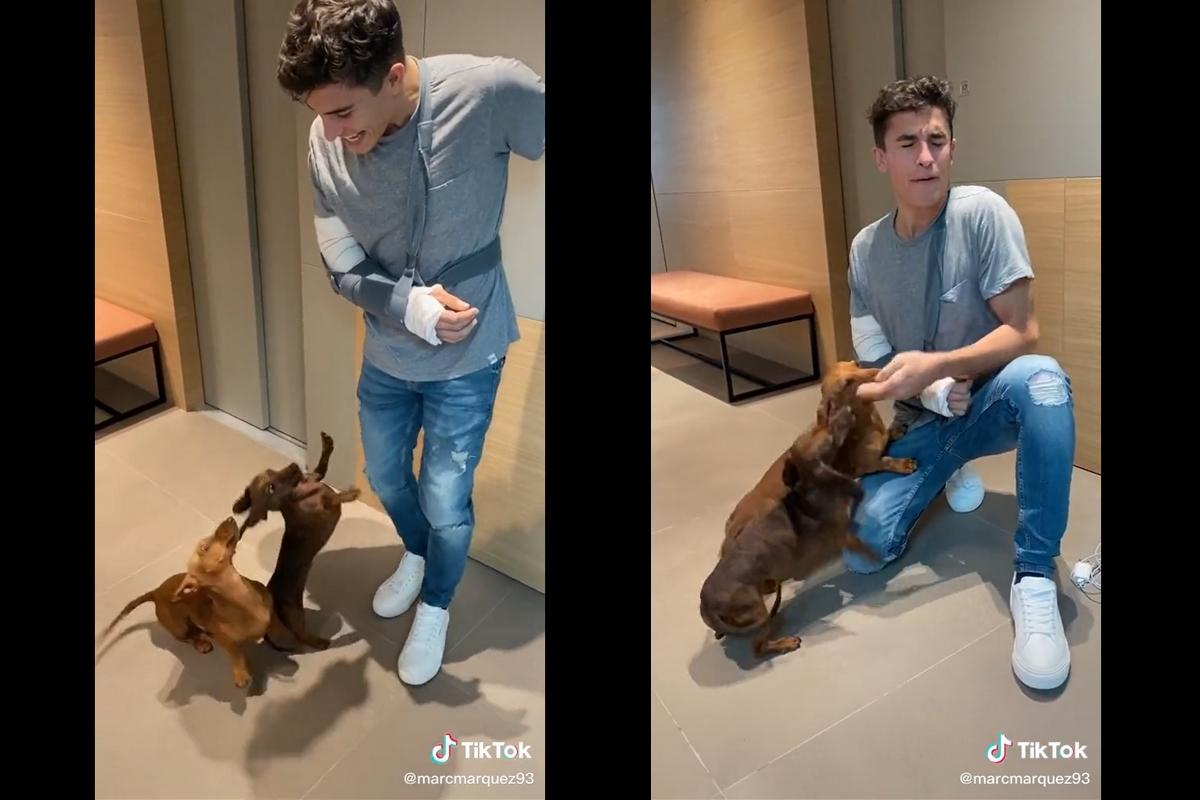 Marc Marquez accolto dai suoi cani (TikTok)
